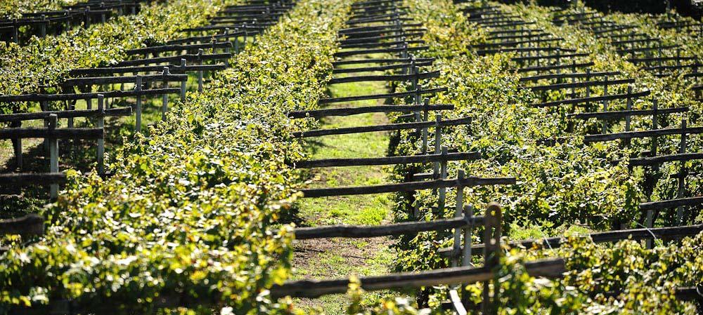 Vercelli e Novara: le terre del vino piemontese