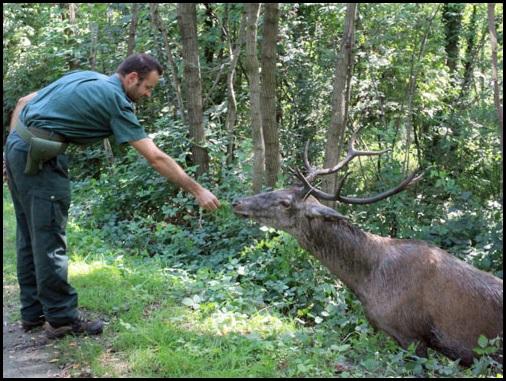 """Operazione """"Salviamo il cervo sulla Tangenziale"""" riuscita!"""