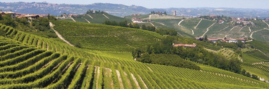 Langhe, Monferrato e Roero, due anni fa diventavano Patrimonio Unesco