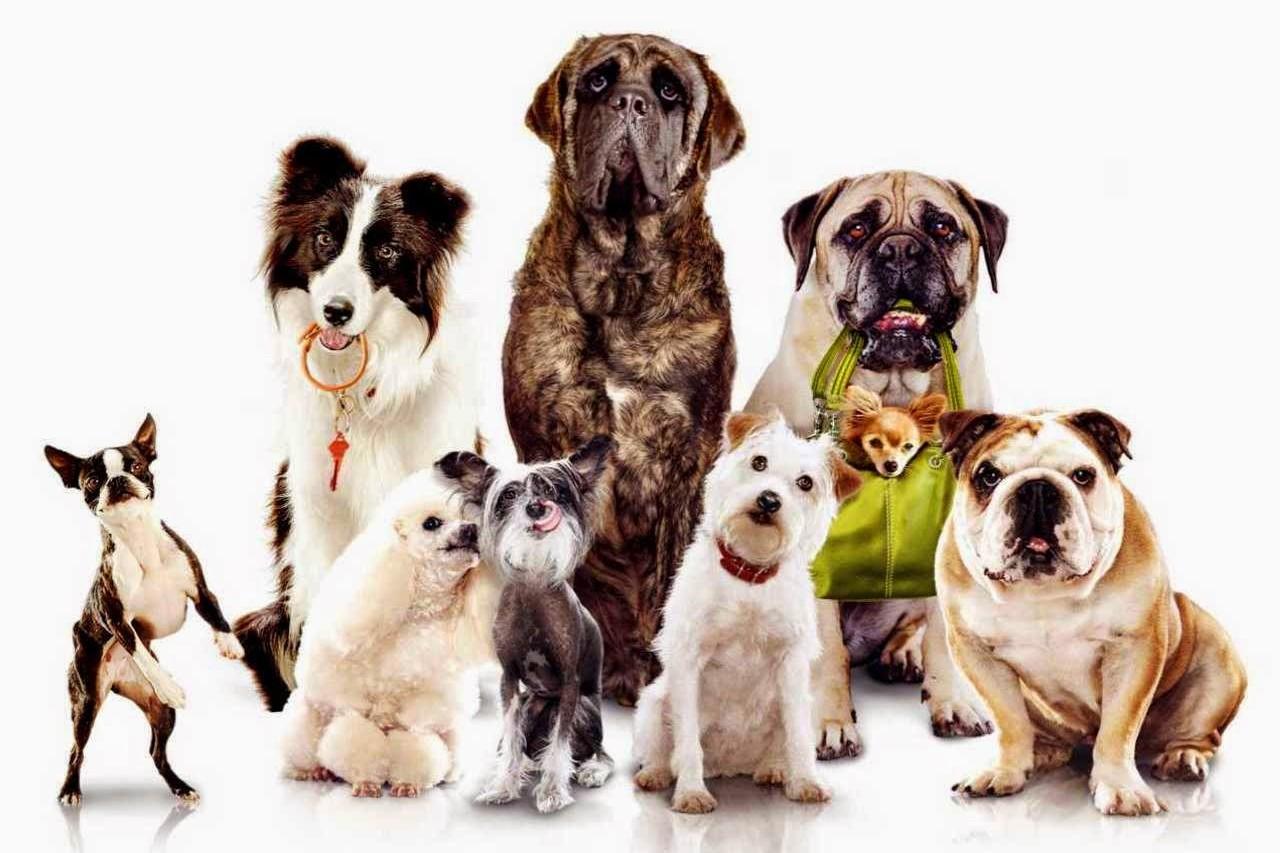 Ecco i Musei di Torino dove possono entrare i cani