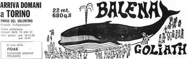 balena golia