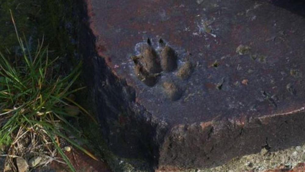 Torino: scoperta impronta di cane di 2100 anni fa