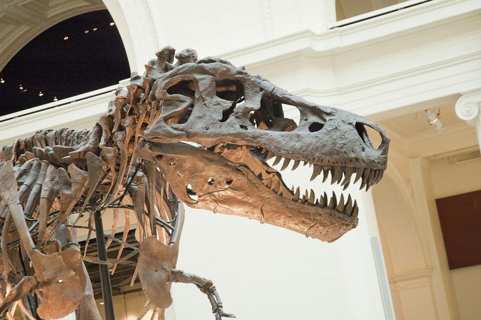 Riapre il museo delle scienze naturali di Torino
