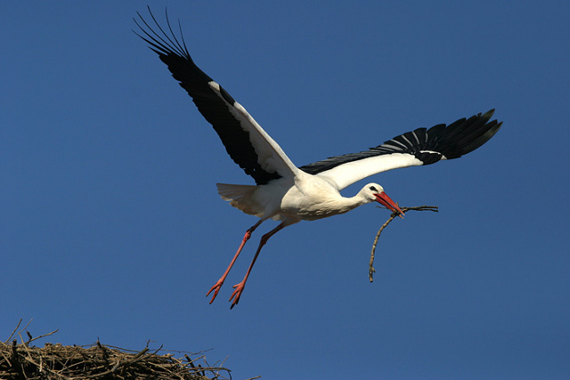 Castello di Racconigi, annullate le visite di maggio per un nido di cicogne