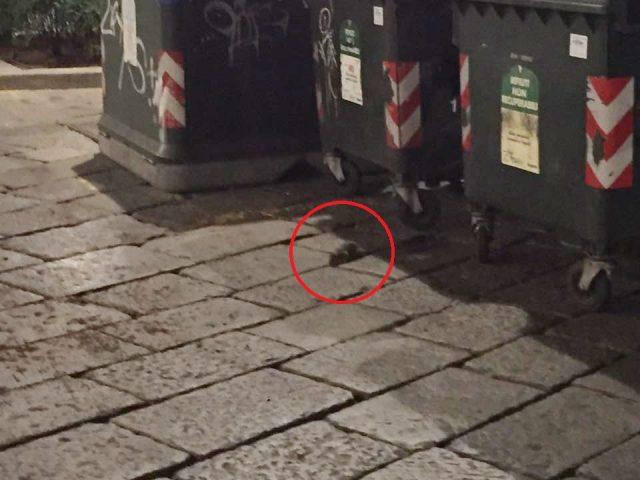 Torino, invasione di topi davanti alla vecchia stazione di Porta Susa