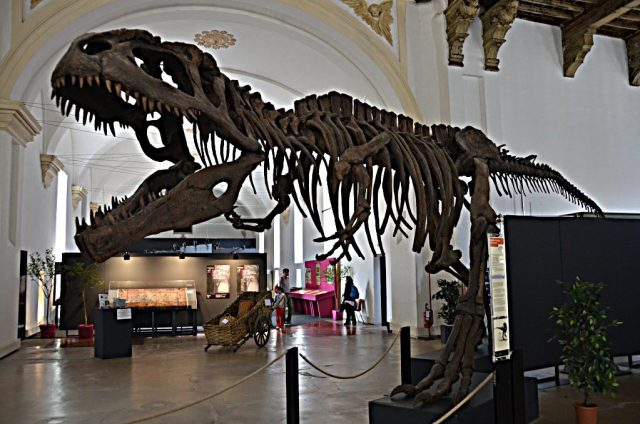 Torino, il Museo di Scienze Naturali riaprirà nel 2019