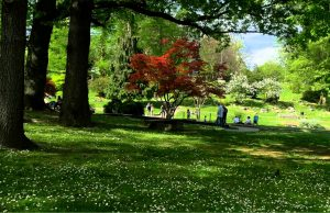 Treepedia, Torino è la 13°città più verde al mondo, la prima d'Italia