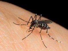Torino, lotta alle zanzare: il Comune stanzia 40mila euro