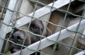 Torino, la Lega del Cane chiude: il canile privato del quartiere Falchera abbandona per mancanza di fondi