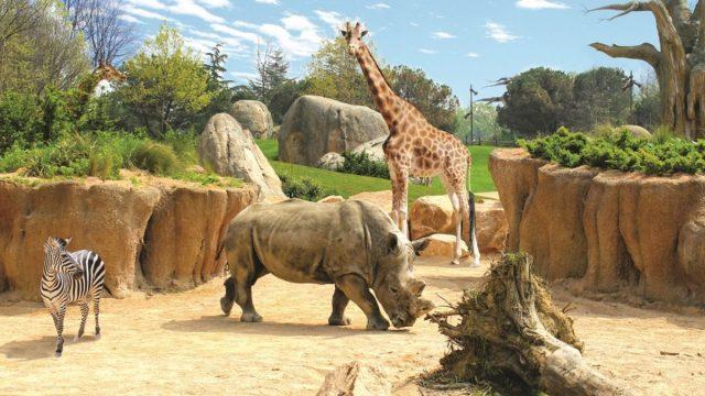 Alle porte di Torino sorgerà un safari africano: il progetto per il bioparco di Cumiana