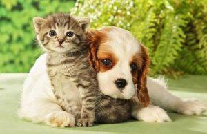 Arriva a Torino QuattroZampeInFiera, la manifestazione dedicata a cani e gatti